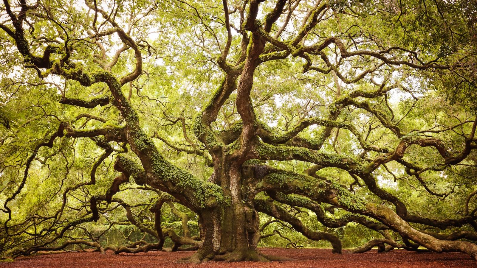 Reiki - Árbol genealógico, transgeneracional